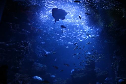 海 海底 青 深い青 神秘的 幻想的 魚 水族館 背景