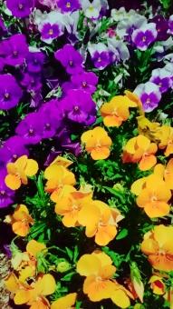 色合い最高❗の写真