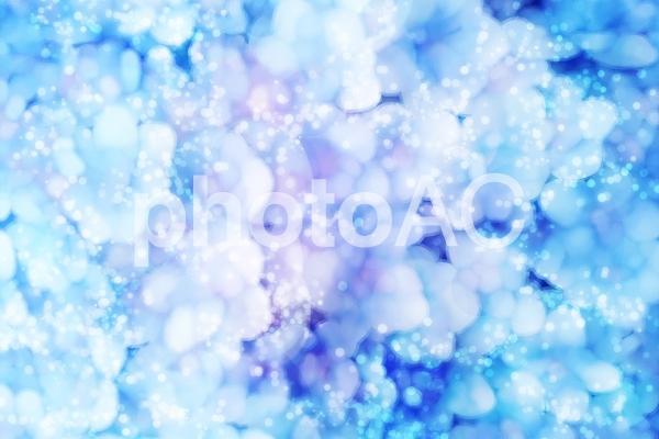 紫陽花のきらめきファンタジーの写真