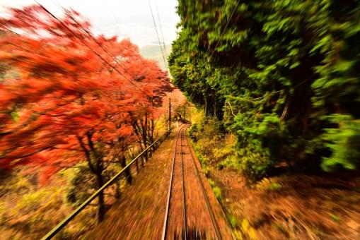 比叡山 京福電鉄 流し撮り 赤 赤色 緑 緑色 紅葉 もみじ モミジ 落葉 落ち葉 鉄道 ケーブルカー 秋 山