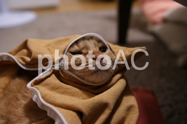 なぜか座布団カバーの変なところにはまってしまって困っている猫の写真