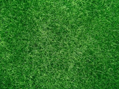 芝 芝生 緑 天然芝 野球場 サッカー場 グラウンド スタジアム 地面 フィールド 競技場 草 葉 葉っぱ 環境 エコ 自然 植物 春 夏 青々 背景 バックグラウンド バック テクスチャ テクスチャー 草原 さわやか 清々しい グリーン