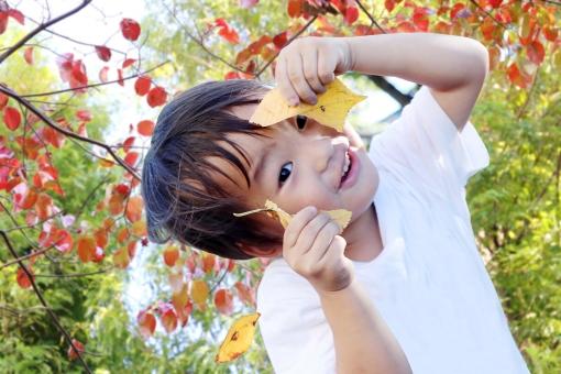 小さな秋の写真