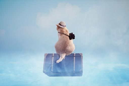 麦わら帽子で旅する猫の写真