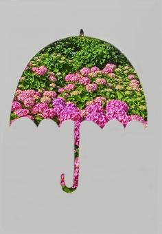 紫陽花 あじさい アジサイ 傘 カサ シルエット 型抜き コピースペース 余白 梅雨 花 風景 自然 ピンク 6月 植物