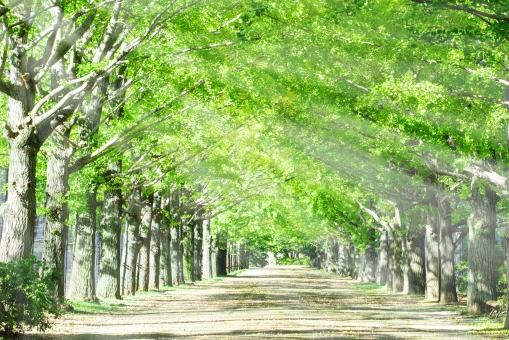 並木に降り注ぐ日光の写真