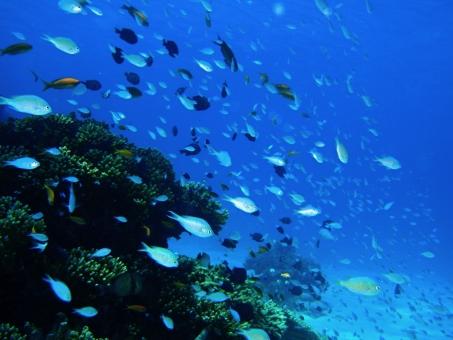 サンゴ礁の魚たちの写真