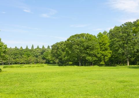 広場 緑 樹木 植物 青空 晴れた日 公園 芝生 空 青