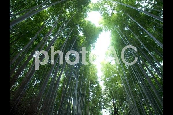 光さす竹林の写真