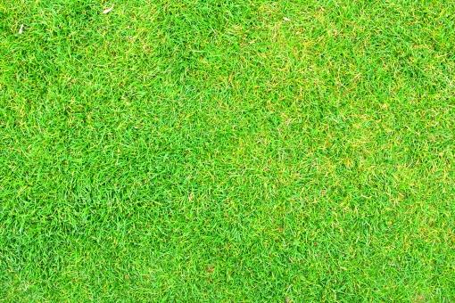 青い芝生 背景素材の写真