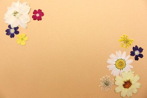 押し花 花 ドライフラワー 小花 植物  背景 背景素材 美しい かわいい 繊細な 便箋 枠 囲み フレーム