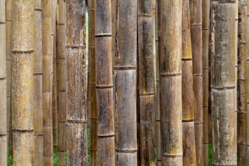 竹 竹材 自然 植物 茶色 黄色 クローズアップ アップ 模様 パターン 背景 バックグラウンド テクスチャ テクスチャー 並ぶ 素材 質感 一面 背景イメージ 背景素材 木材 乾燥 壁 節 ふし