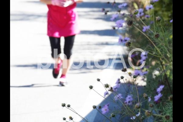 コスモスとマラソンイメージの写真