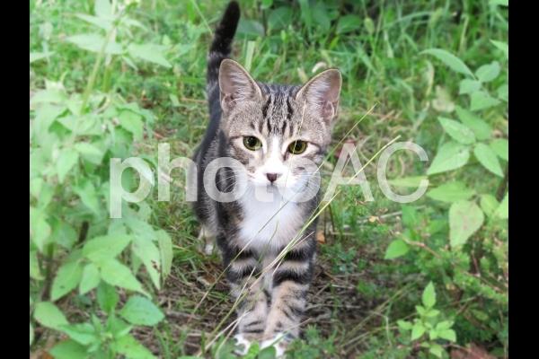 凛とした猫の写真