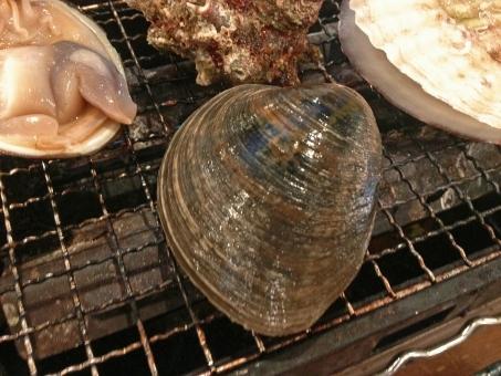 ホンビノスガイ 白蛤 蛤 ハマグリ はまぐり 貝 貝類 二枚貝 浜焼き 網焼き 焼き物 魚貝 魚介 魚貝類 魚介類 魚貝料理 魚介料理 海鮮 海鮮料理 日本食 和食 日本料理 食べ物 食品 食材 料理 調理 グルメ 食糧 食卓