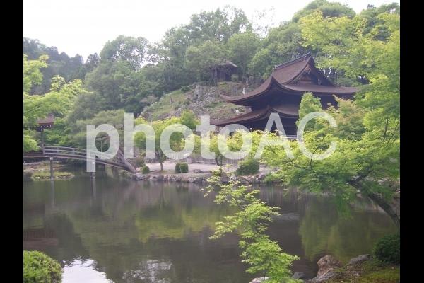 日本の池の写真