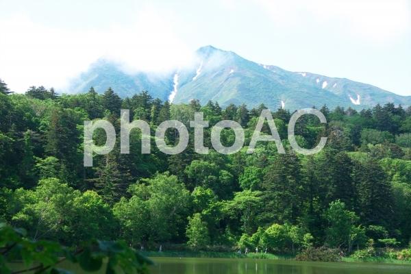 利尻 礼文島の初夏の写真