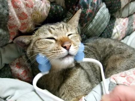 猫 ネコ ねこ 愛猫 小顔 マッサージ 快適 目をつむる コロコロ 気持ちいい 幸せ 表情 1匹 アップ 美容 美顔 家猫 飼い猫 室内猫 リラックス くつろぐ マッサージ器 動物 リフトアップ 面白い おもしろい ヒゲ 目を閉じた ちゃこ 癒し