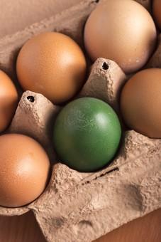 たまご 卵 玉子 エッグ 楕円 白バック 卵色  料理 並べる 生き物 食べ物 食材 食料 置く 置いてある 物撮り 屋内 人物なし 上から 霜降り 7個 整然 複数 レシピ 鶏 にわとり ニワトリ グリーン 着色 緑 アップ ズーム パック パック詰め 紙パック 紙