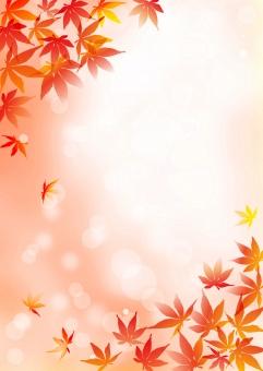 紅葉_オレンジ_縦背景の写真
