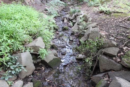 小川 せせらぎ 水 流れる 日陰 石 岩 こけ 葉 草 自然 植物 風景 涼しい 晴れ しぶき 土 地面 落ち着く マイナスイオン 癒し 休憩 休息 和 風情 アジア 日本