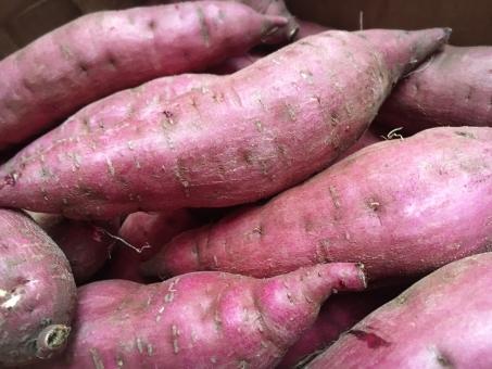 さつまいも サツマイモ 芋 鹿児島 紅はるか 紅 食べ物 食欲 秋 芋掘り 行楽 やすみ 休日 レシピ 献立 スイーツ デザート 離乳食 食物繊維 農業 農家 スイートポテト