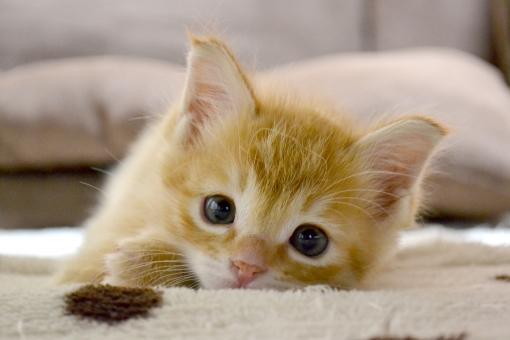 見つめる猫の写真