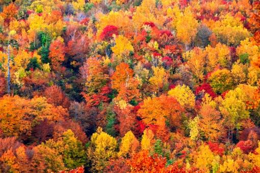 色鮮やかな山の紅葉の写真
