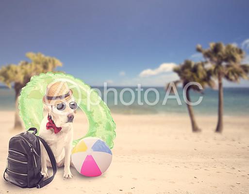 バケーション中の犬の写真