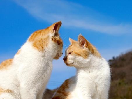 猫 ネコ ねこ 島 男木島 瀬戸内海 猫島 ネコ島 ねこ島 島猫 島ネコ 島ねこ ノラ のら 野良 ノラねこ ノラ猫 ノラネコ 野良ネコ 野良ねこ 野良猫 のらネコ のら猫 のらねこ 仲良し 空 青空 かわいい キュート