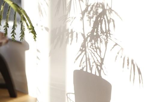 植物 観葉植物 鉢 鉢植え 葉 葉っぱ リーフ 緑 グリーン 鑑賞 インテリア 飾り 装飾 おしゃれ 癒し 趣味 栽培 育てる インドアガーデニング 園芸 影 シャドウ シルエット 陽当たり 日差し 背景 壁 室内 リビング ナチュラル