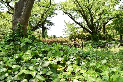 新緑 しんりょく 3月 4月 5月 6月 葉 葉っぱ 緑 黄緑 みどり きみどり 自然 綺麗 爽やか 見上げる 人気 植物 樹木 新鮮 森 林 公園 グリーン 暖かい 季節 若草色 若葉 木洩れ日 木漏れ日 こもれび 明るい 気分 最高 景色 気持ちが良い 空気 クリーン 森林浴 背景 テクスチャ 壁紙 バックグラウンド ヒーリング リラックス 癒し マイナスイオン 初夏 夏 春 リラクゼーション 涼しい セラピー エコ eco アップ 接写 至近距離 ミニチュア風 可愛い かわいい 小さい 雑草 草原 野原