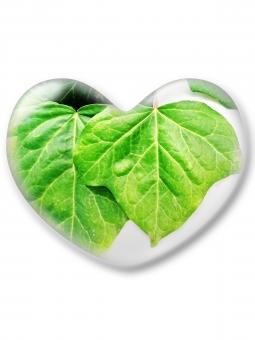 ハート はーと heart 素材 背景 アイコン ラブ love 愛 ロマンチック バレンタイン フレーム 枠 葉 ミドリ 緑 みどり グリーン green 白バック コピースペース クリスタル風