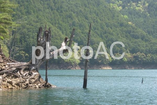 池原ダムと立ち木(奈良県)の写真