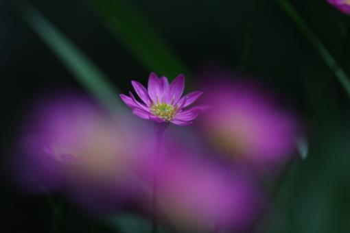 花 植物 自然 ボケ効果 露出アンダー