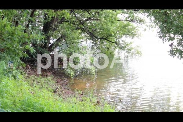 愛知 大府 噴水のある公園 池の水辺の写真