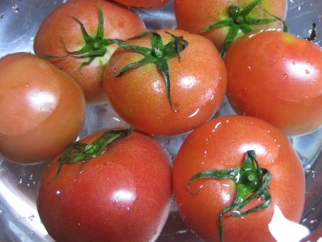 トマト とまと 野菜 赤 ベジタブル サラダ ボール 水洗い