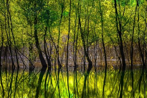 樹木 草 葉 茂る 森 木々 緑 グリーン リーフ コントラスト セルビア 自然 エコ 環境 風景 山 川 湖 水 美しい 海外 エコ活動 環境問題 川岸 水面 鏡面 反射 水辺