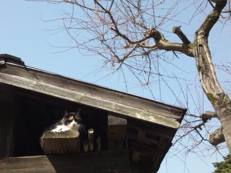 家 ビル 空 風景 木 窓 建築 都市 動物 猫 冬 屋根 田舎 通り 秋 古い 木材 かくれんぼ 軒下 肖像画 哺乳動物