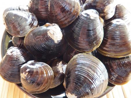 しじみ シジミ 貝 貝殻 かい 骨貝 海 海の生き物 砂抜き 調理 料理 汁物 味噌汁 生物 しじみ汁 シジミ汁 蜆 二枚貝 和食 食材 食べ物 だし ダシ 健康食品 健康 オルニチン 肝臓 二日酔い 飲みすぎ たくさん