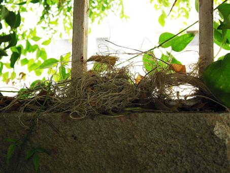 アート 芸術 美術 植物 自然 木 樹木 枝 葉 葉っぱ 緑 成長 育つ 伸びる 生える 若々しい 光 太陽 太陽光 陽射し 柱 木製 コンクリート 岩 石 無造作 ブロック 風景 景色 無人