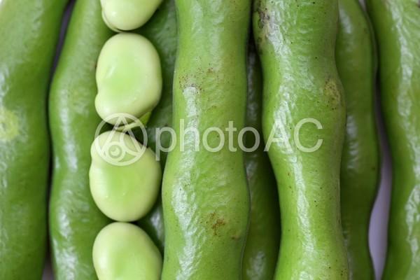 空豆の整列の写真