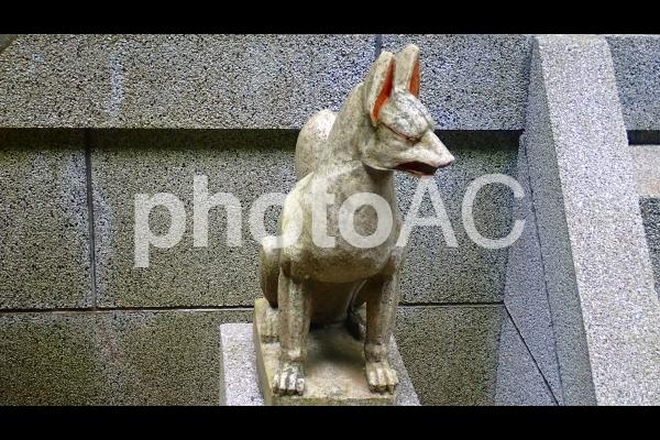 狛狐の写真