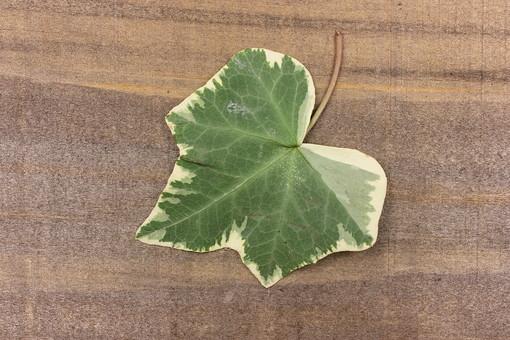 葉 葉っぱ 緑 植物 ナチュラル エコ エコロジー 自然 新緑 ピュア 葉脈 木 木材 板 アンティーク レトロ テクスチャ 背景 壁紙 フレーム 枠