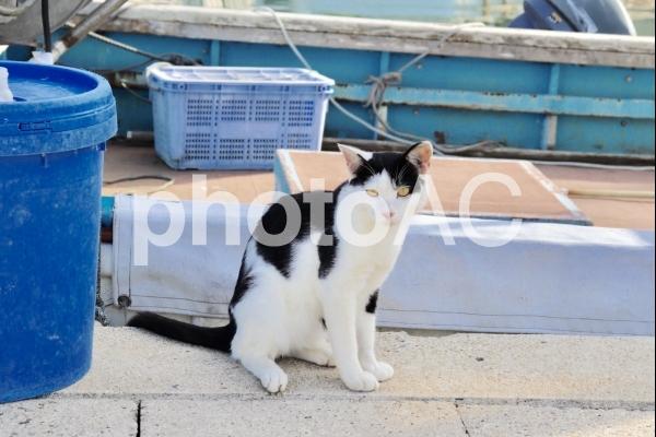 島猫 たたずむの写真