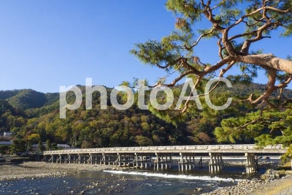 渡月橋の写真