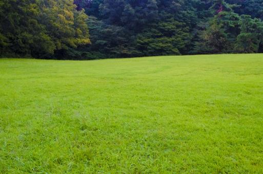 芝 芝生 緑 緑地 葉 植物 屋外 野外 グリーン 地面 大地 緑色 風景 天然芝 草場 草葉 草 自然 樹木 木々 木 森  環境 全面 一面