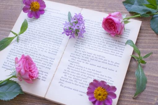 ピンクの花 植物 薔薇 バラ ばら ジニアプロフュージョン ヒポエステス 英文字 英字 英語 外国語 花 本 古書 百日草