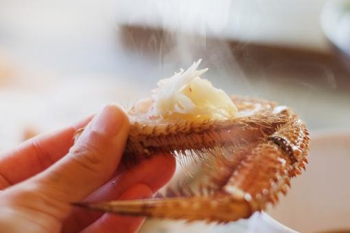 毛ガニの足 毛ガニ 蟹 カニ かに 蟹身 蟹の爪 茹でがに
