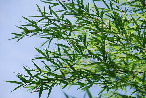 奈良 関西 近畿 日本 観光 観光地 旅行 自然 植物 風景 景色 葉 葉っぱ 緑 黄緑 笹 笹の葉 空 青空 重なる 多い 密集 伸びる 葉面 葉身 複数 屋外 無人